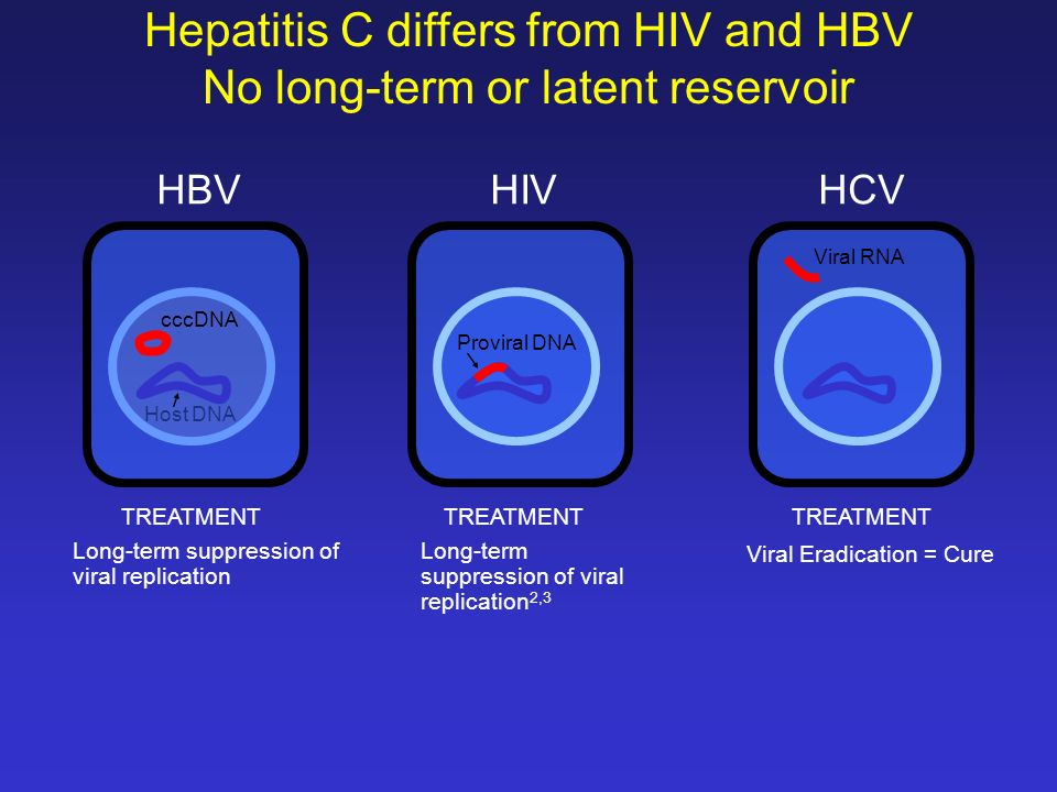 Hepatitis C differs from HIV and HBV No long-term or latent reservoir