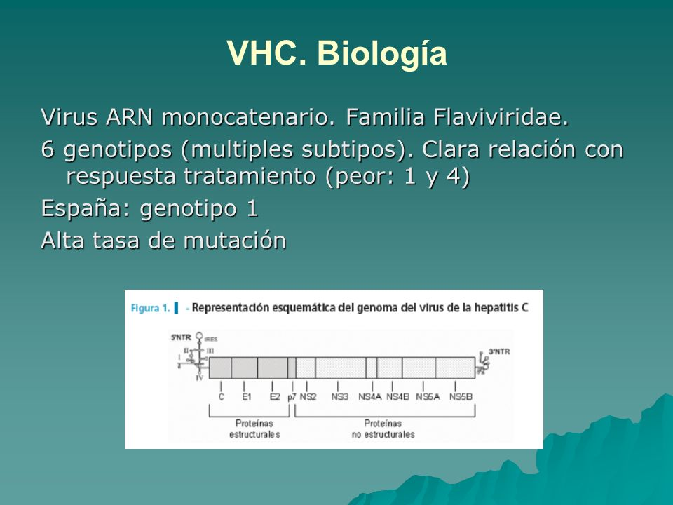 VHC. Biología Virus ARN monocatenario. Familia Flaviviridae.