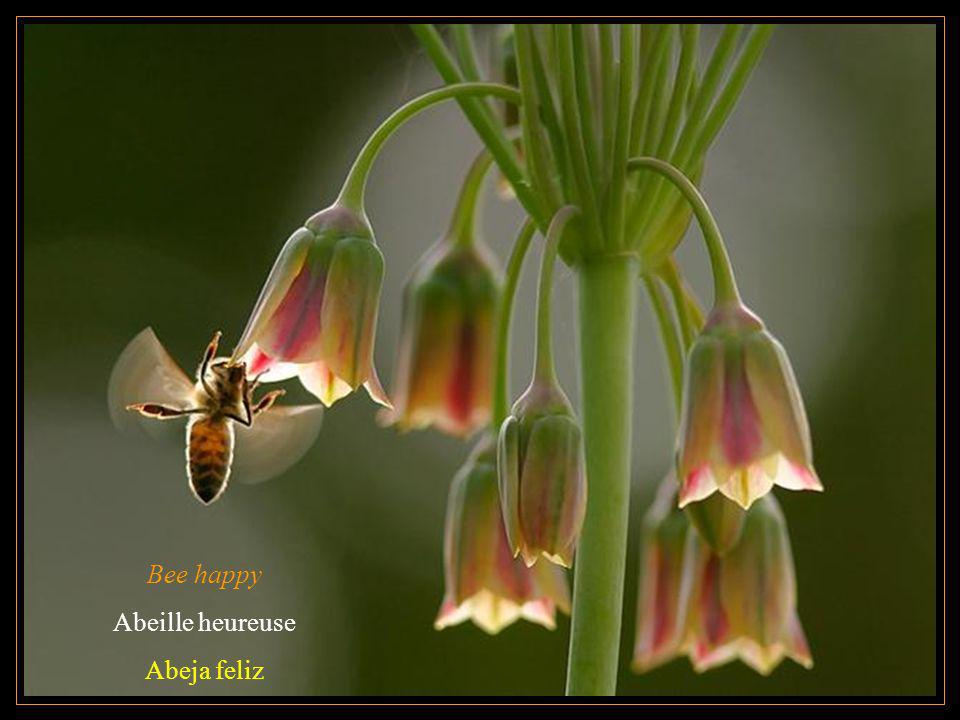 Bee happy Abeille heureuse Abeja feliz