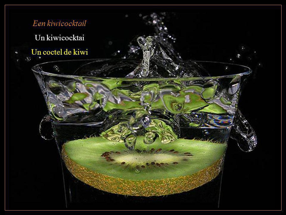 Een kiwicocktail Un kiwicocktai Un coctel de kiwi