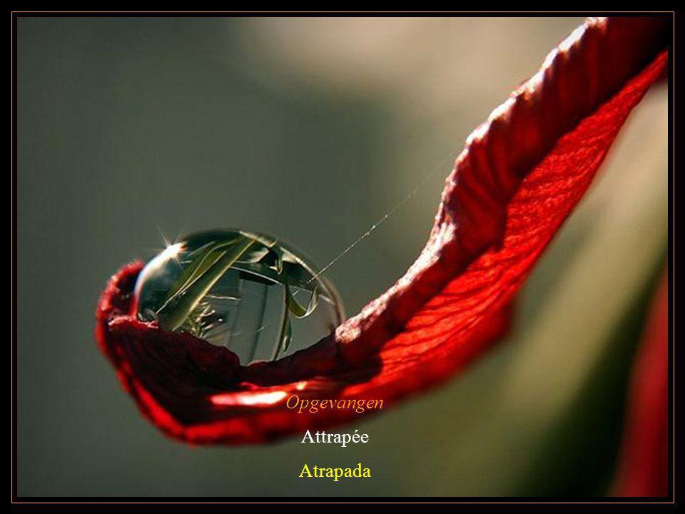 Opgevangen Attrapée Atrapada