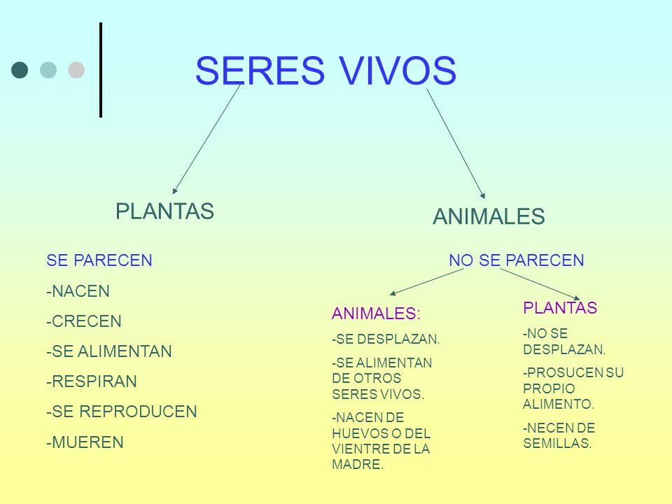 SERES VIVOS PLANTAS ANIMALES SE PARECEN -NACEN -CRECEN -SE ALIMENTAN