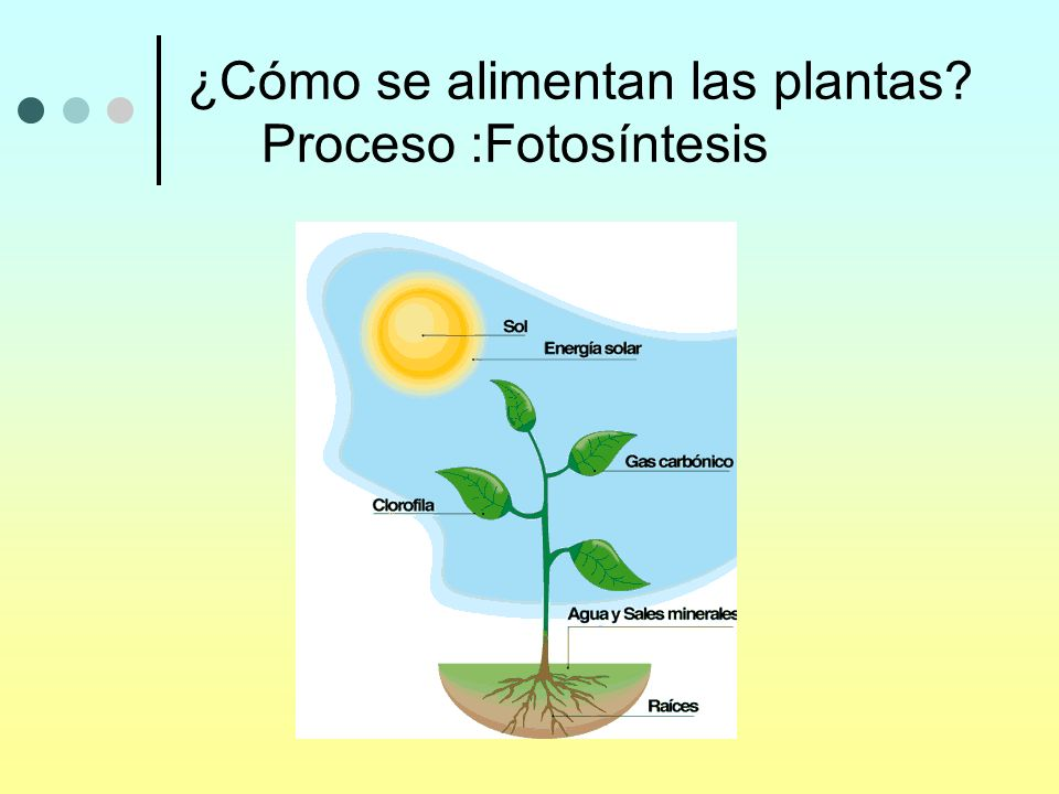 Seres vivos plantas animales se parecen nacen crecen se for Como se planta la lavanda