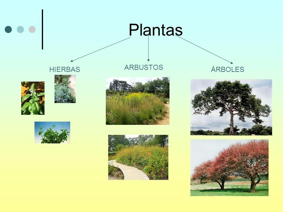 Plantas ARBUSTOS HIERBAS ÁRBOLES
