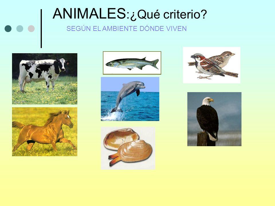 ANIMALES:¿Qué criterio