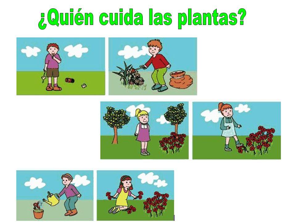 ¿Quién cuida las plantas