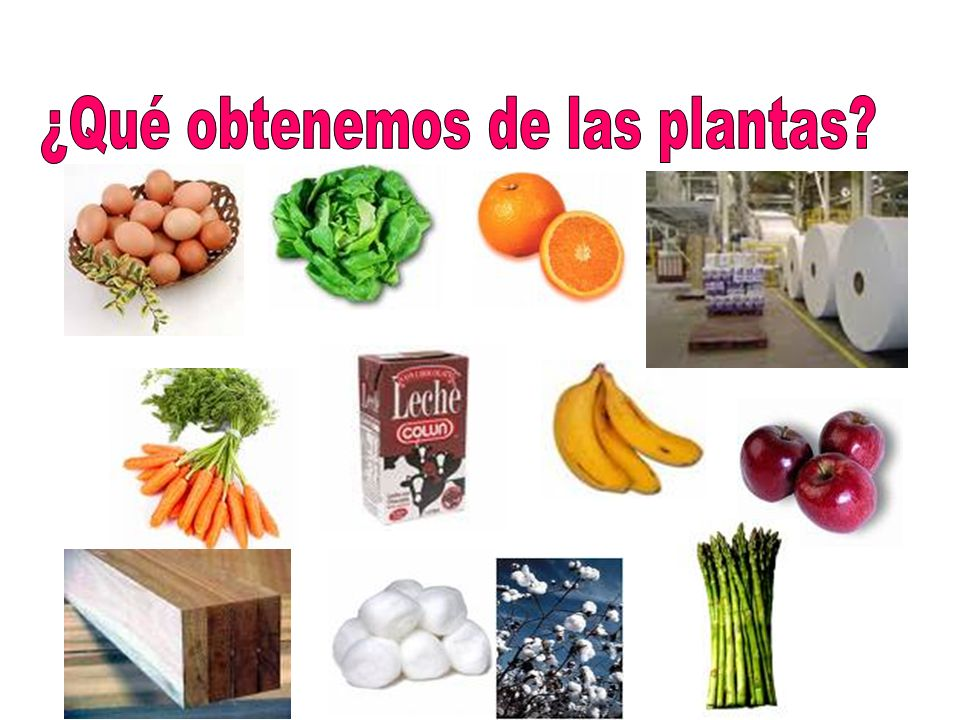 ¿Qué obtenemos de las plantas