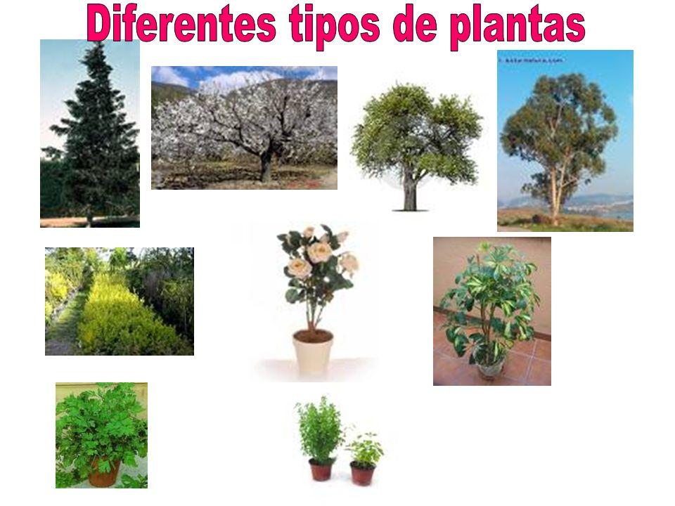 Diferentes tipos de plantas