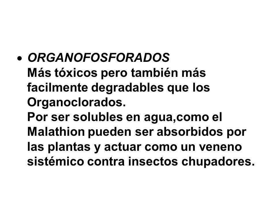 ORGANOFOSFORADOS Más tóxicos pero también más facilmente degradables que los Organoclorados.