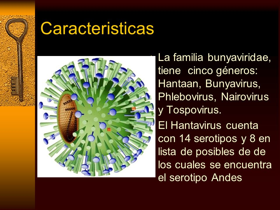 CaracteristicasLa familia bunyaviridae, tiene cinco géneros: Hantaan, Bunyavirus, Phlebovirus, Nairovirus y Tospovirus.