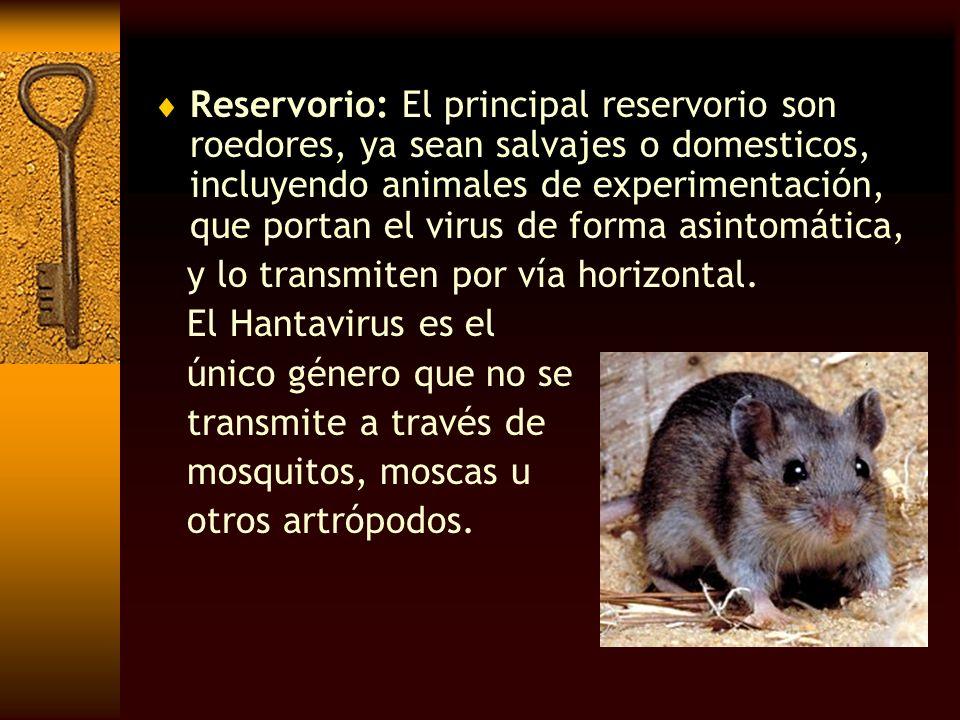 Reservorio: El principal reservorio son roedores, ya sean salvajes o domesticos, incluyendo animales de experimentación, que portan el virus de forma asintomática,