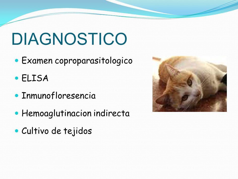 DIAGNOSTICO Examen coproparasitologico ELISA Inmunofloresencia