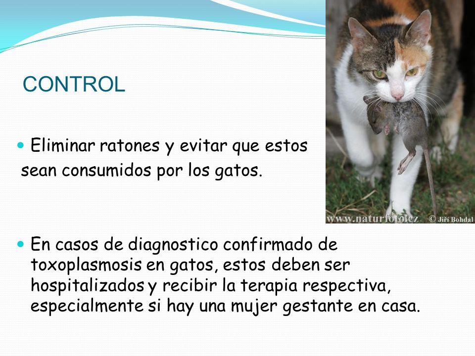 CONTROL Eliminar ratones y evitar que estos