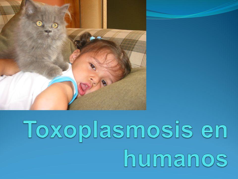Toxoplasmosis en humanos