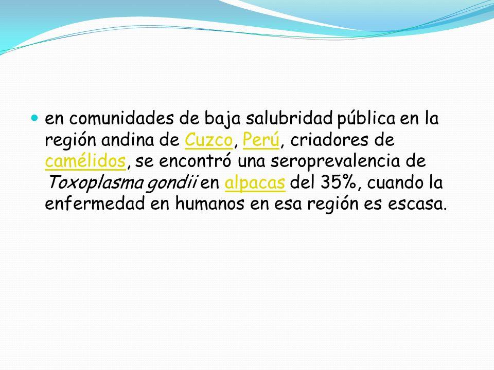 en comunidades de baja salubridad pública en la región andina de Cuzco, Perú, criadores de camélidos, se encontró una seroprevalencia de Toxoplasma gondii en alpacas del 35%, cuando la enfermedad en humanos en esa región es escasa.