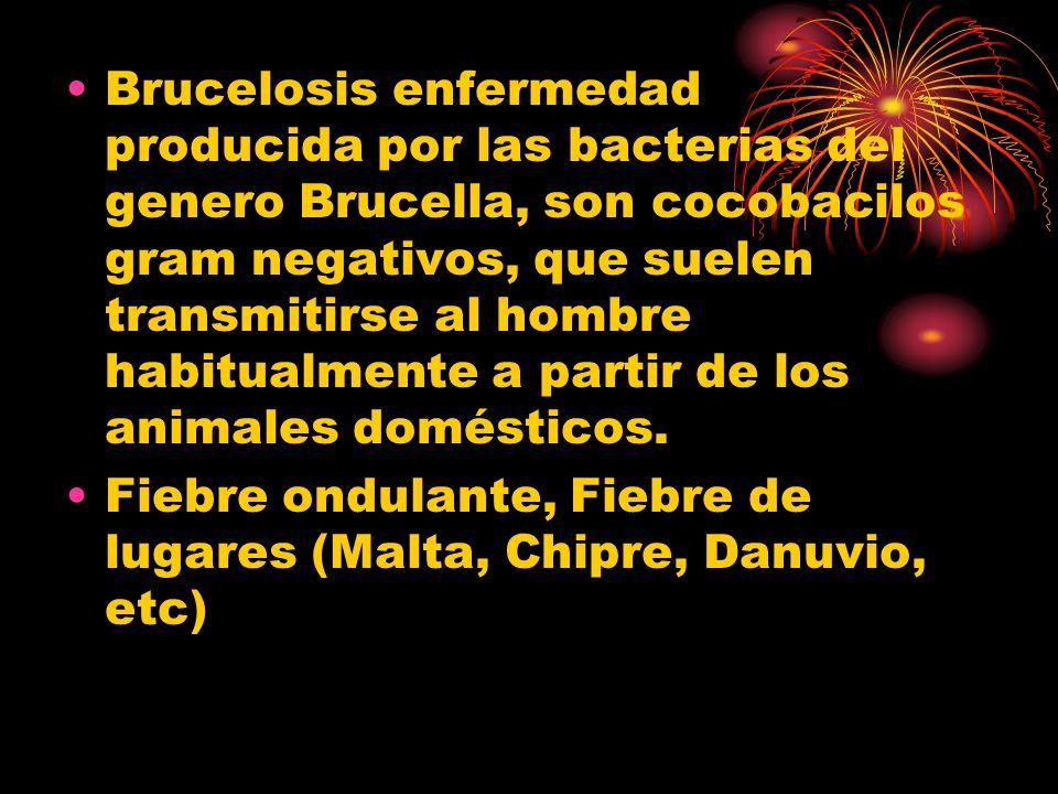 Brucelosis enfermedad producida por las bacterias del genero Brucella, son cocobacilos gram negativos, que suelen transmitirse al hombre habitualmente a partir de los animales domésticos.