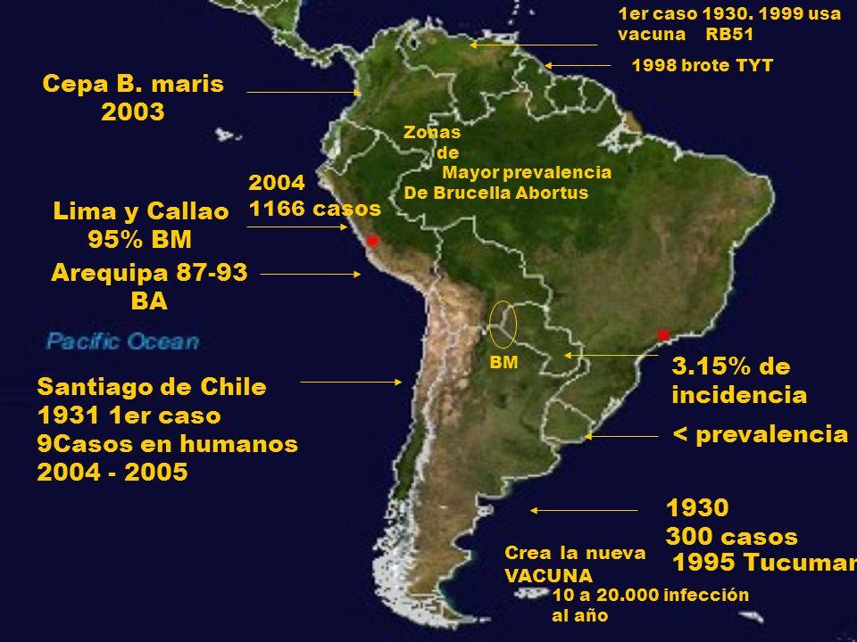 Cepa B. maris 2003 Lima y Callao 95% BM Arequipa 87-93 BA 3.15% de