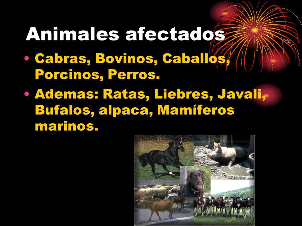 Animales afectados Cabras, Bovinos, Caballos, Porcinos, Perros.