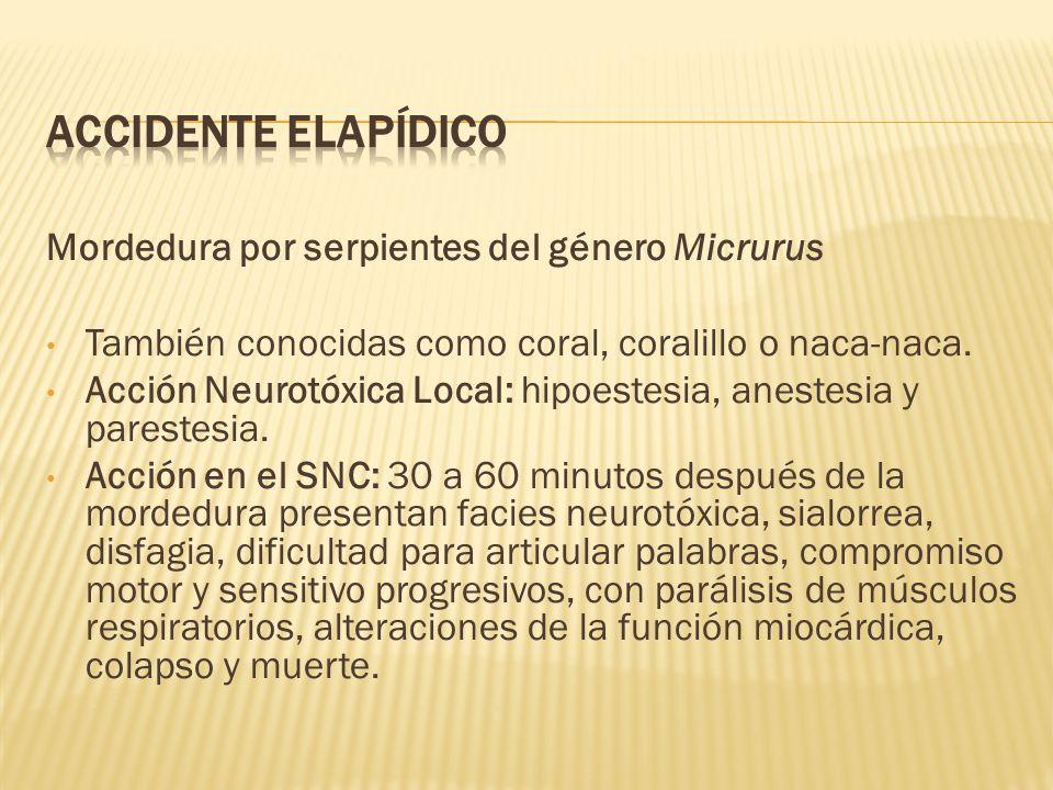Accidente Elapídico Mordedura por serpientes del género Micrurus
