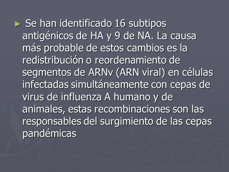 Se han identificado 16 subtipos antigénicos de HA y 9 de NA