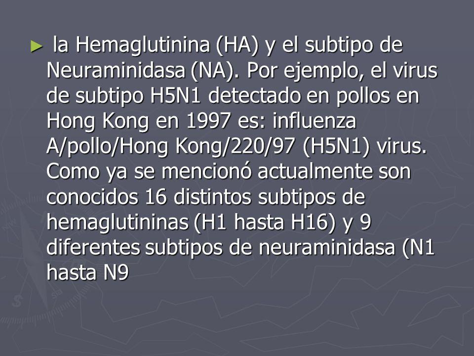 la Hemaglutinina (HA) y el subtipo de Neuraminidasa (NA)