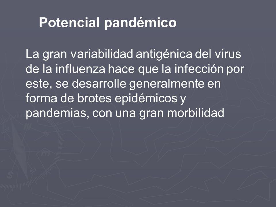 Potencial pandémico