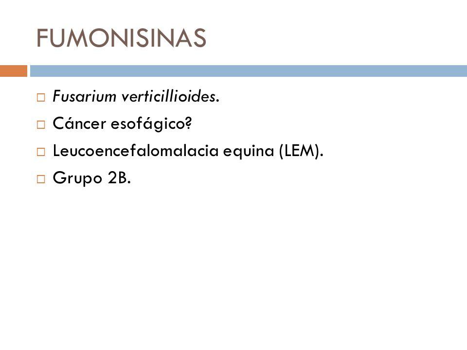 FUMONISINAS Fusarium verticillioides. Cáncer esofágico