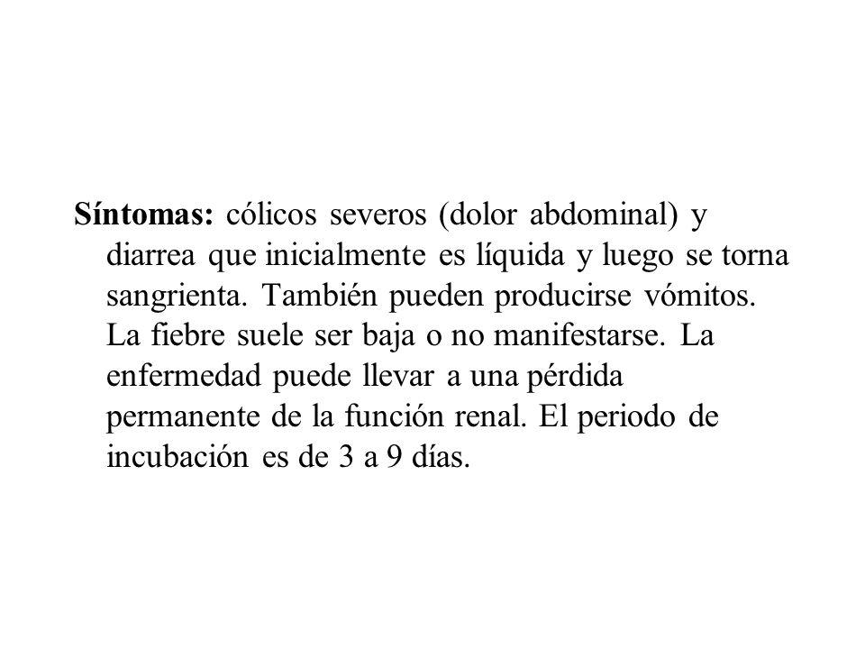 Síntomas: cólicos severos (dolor abdominal) y diarrea que inicialmente es líquida y luego se torna sangrienta.