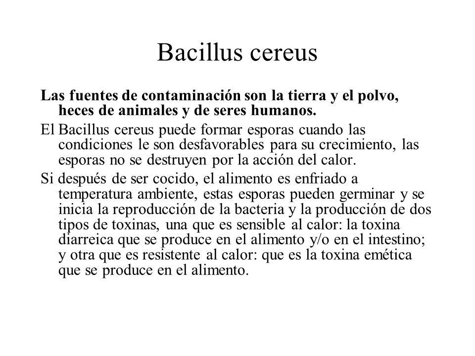 Bacillus cereus Las fuentes de contaminación son la tierra y el polvo, heces de animales y de seres humanos.
