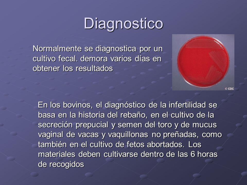 Diagnostico Normalmente se diagnostica por un cultivo fecal. demora varios días en obtener los resultados.