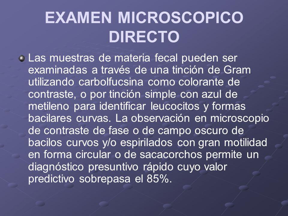 EXAMEN MICROSCOPICO DIRECTO