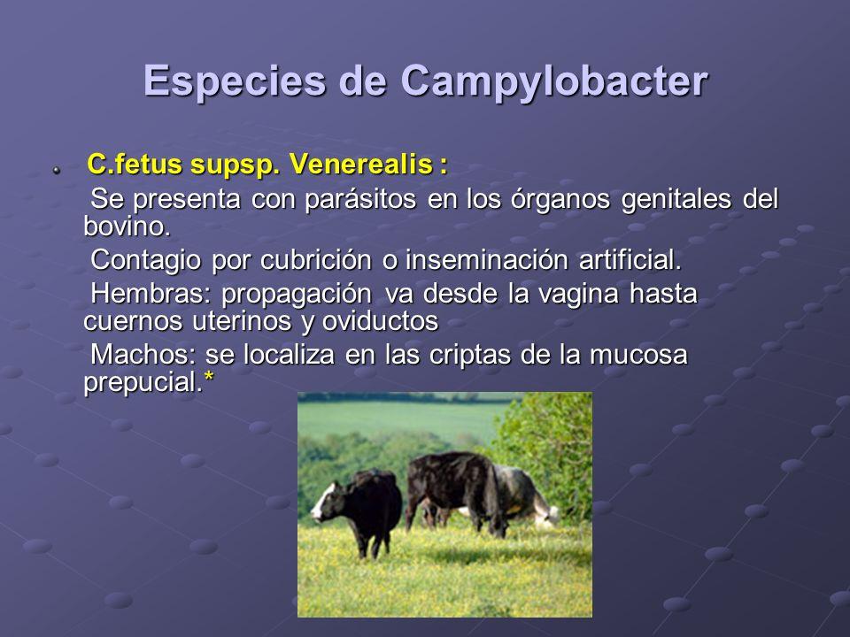 Especies de Campylobacter