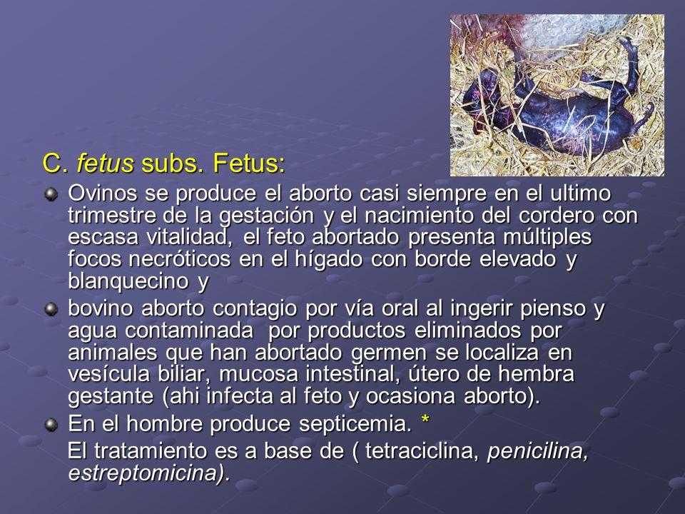 C. fetus subs. Fetus: