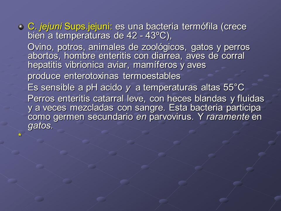 C. jejuni Sups.jejuni: es una bacteria termófila (crece bien a temperaturas de 42 - 43ºC),