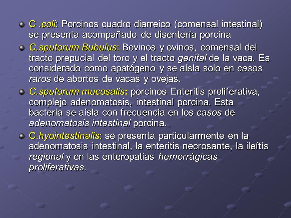 C .coli: Porcinos cuadro diarreico (comensal intestinal) se presenta acompañado de disentería porcina