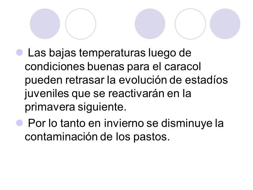 Las bajas temperaturas luego de condiciones buenas para el caracol pueden retrasar la evolución de estadíos juveniles que se reactivarán en la primavera siguiente.