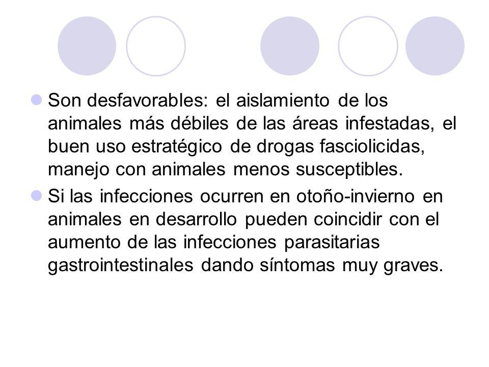 Son desfavorables: el aislamiento de los animales más débiles de las áreas infestadas, el buen uso estratégico de drogas fasciolicidas, manejo con animales menos susceptibles.