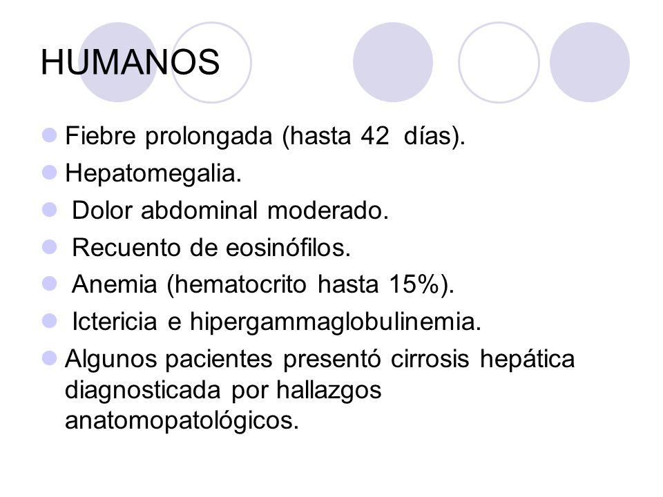 HUMANOS Fiebre prolongada (hasta 42 días). Hepatomegalia.