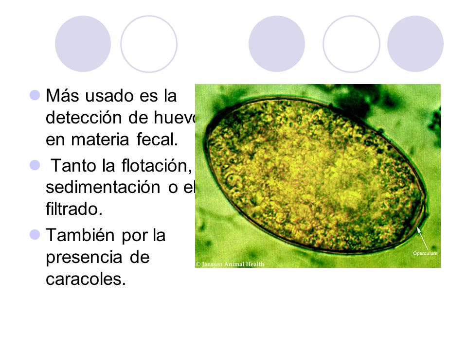 Más usado es la detección de huevos en materia fecal.