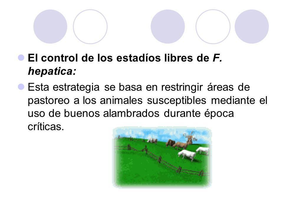 El control de los estadíos libres de F. hepatica:
