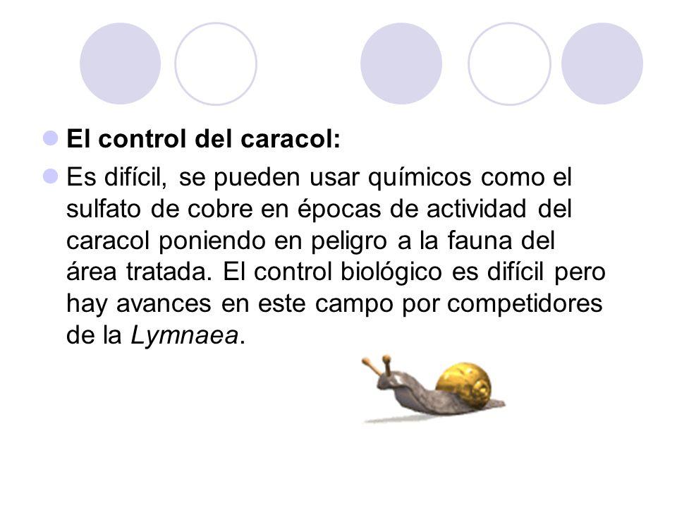 El control del caracol: