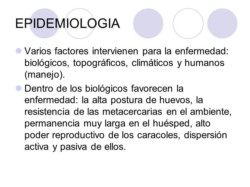 EPIDEMIOLOGIAVarios factores intervienen para la enfermedad: biológicos, topográficos, climáticos y humanos (manejo).