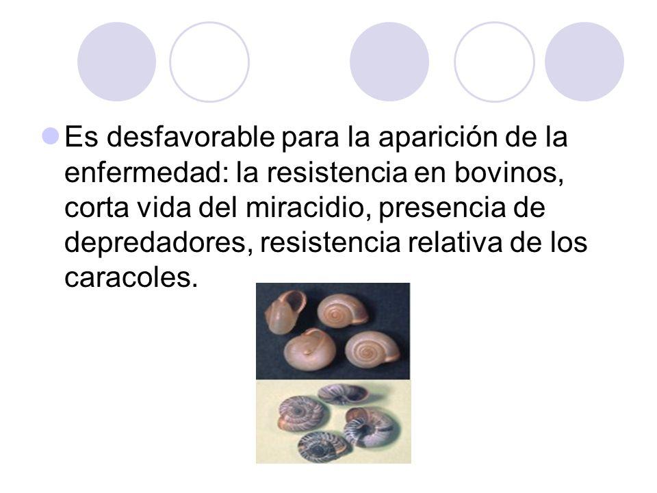Es desfavorable para la aparición de la enfermedad: la resistencia en bovinos, corta vida del miracidio, presencia de depredadores, resistencia relativa de los caracoles.
