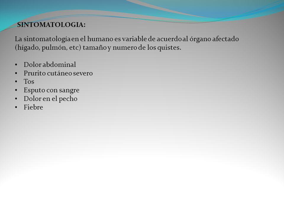 SINTOMATOLOGIA: La sintomatología en el humano es variable de acuerdo al órgano afectado (hígado, pulmón, etc) tamaño y numero de los quistes.