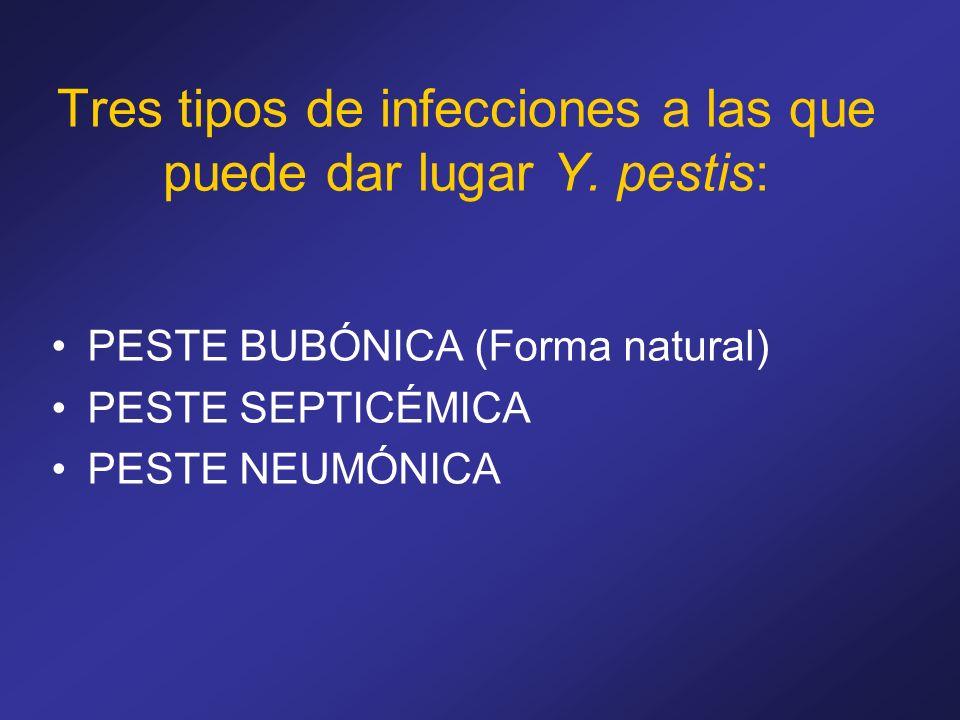 Tres tipos de infecciones a las que puede dar lugar Y. pestis: