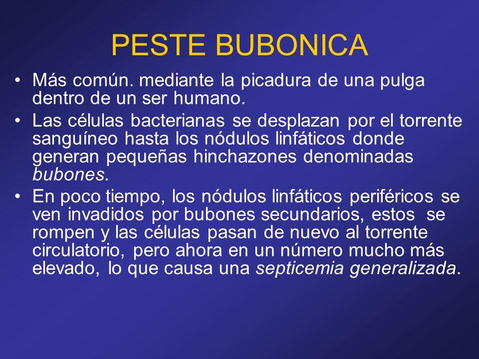 PESTE BUBONICA Más común. mediante la picadura de una pulga dentro de un ser humano.