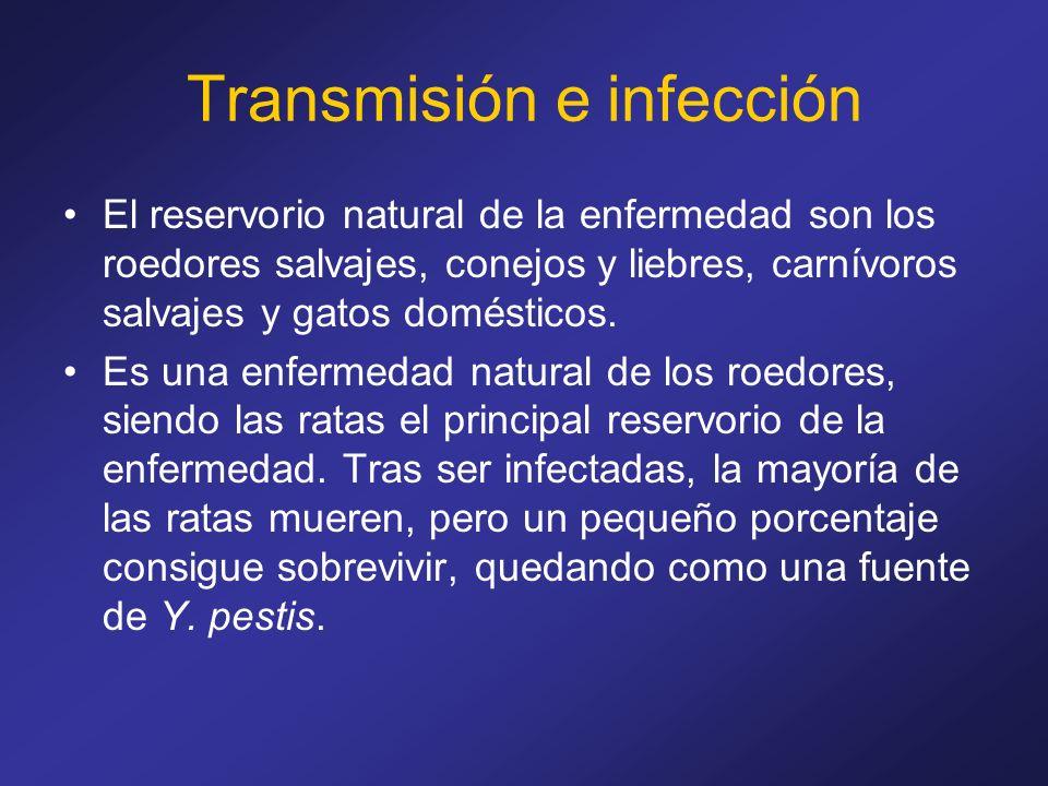 Transmisión e infección