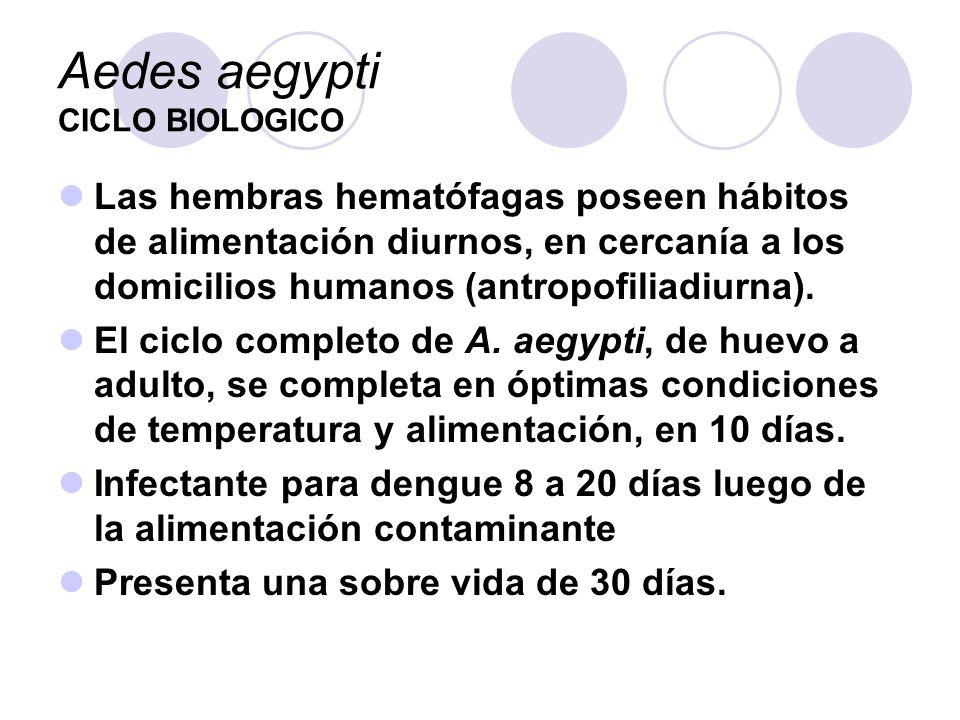 Aedes aegypti CICLO BIOLOGICO