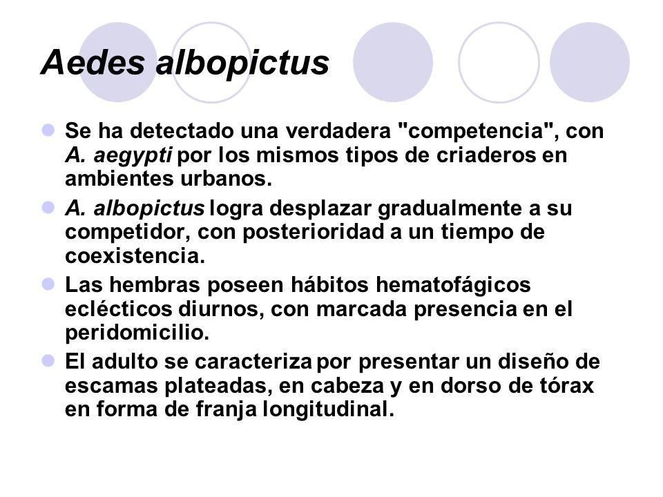 Aedes albopictus Se ha detectado una verdadera competencia , con A. aegypti por los mismos tipos de criaderos en ambientes urbanos.