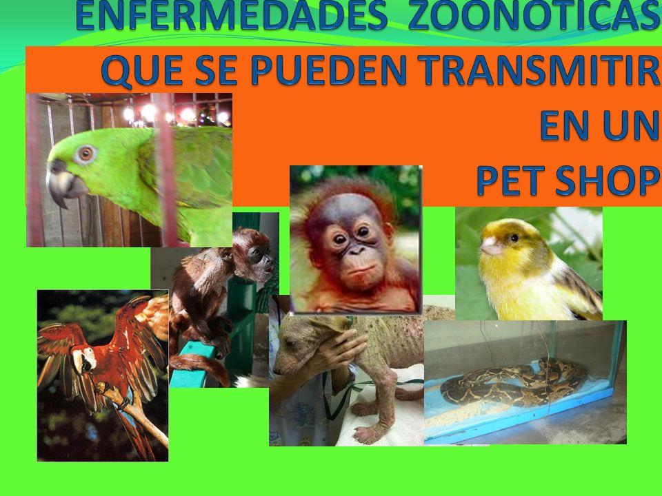 ENFERMEDADES ZOONOTICAS QUE SE PUEDEN TRANSMITIR EN UN PET SHOP